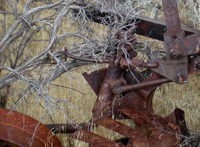 photoblog image Rusty